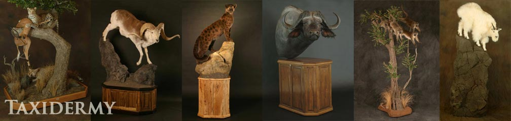 life size taxidermy services and animal art taxidermy of north american animals