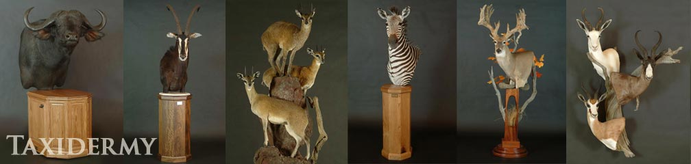 big game taxidermy pedestal mount services