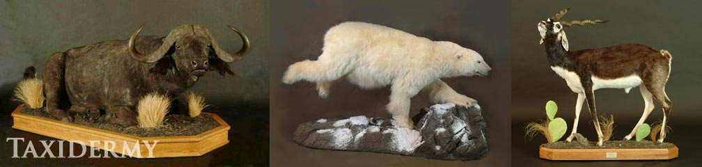 exotic animal taxidermy of life size animals