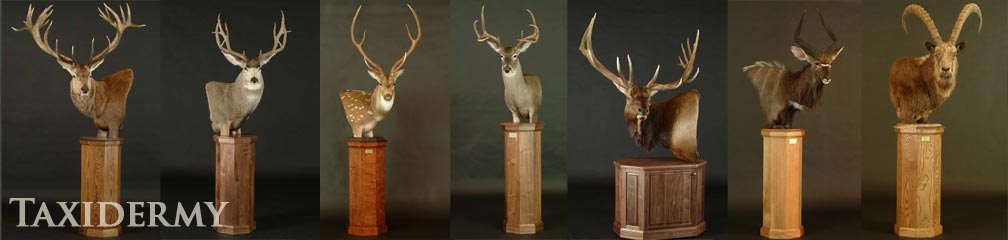 moose, duiker, ibex and red sheep animal taxidermy