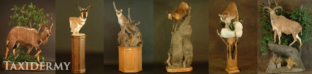 big game taxidermy mounts can include grasses and wood drifts