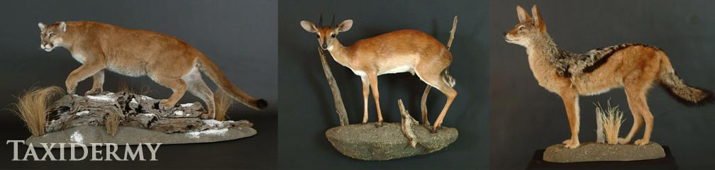big game life size pedestal taxidermy trophies
