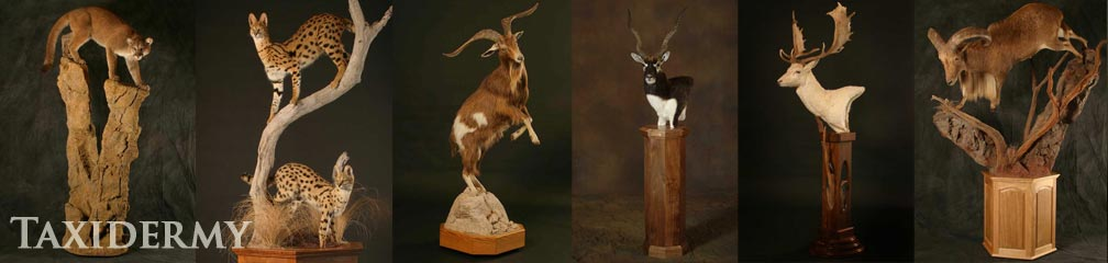 natural animal behavior and pose in our big game taxidermy services