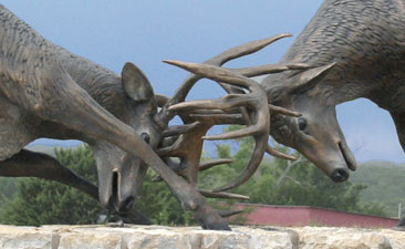 Close Up of Full Scale Bronze Sculpture of Two Whitetail Deer Fighting
