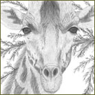 giraffe Wildlife Drawing For Sale