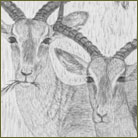 Group of Impalas Wildlife Drawing For Sale