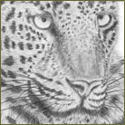 Leopard Wildlife Drawing For Sale
