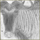 Wildebeest Wildlife Drawing For Sale