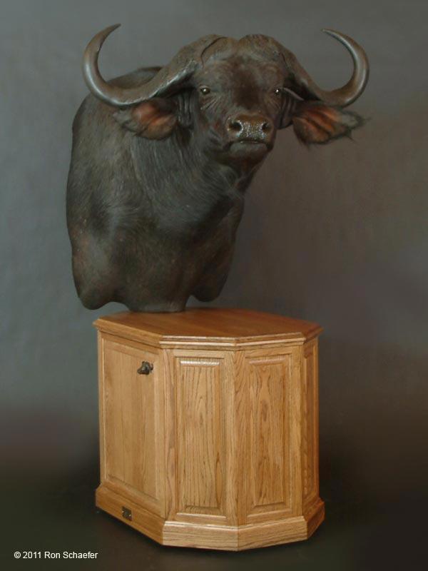 Big Game Taxidermy Half Size Amp Pedestal Mounts Gallery