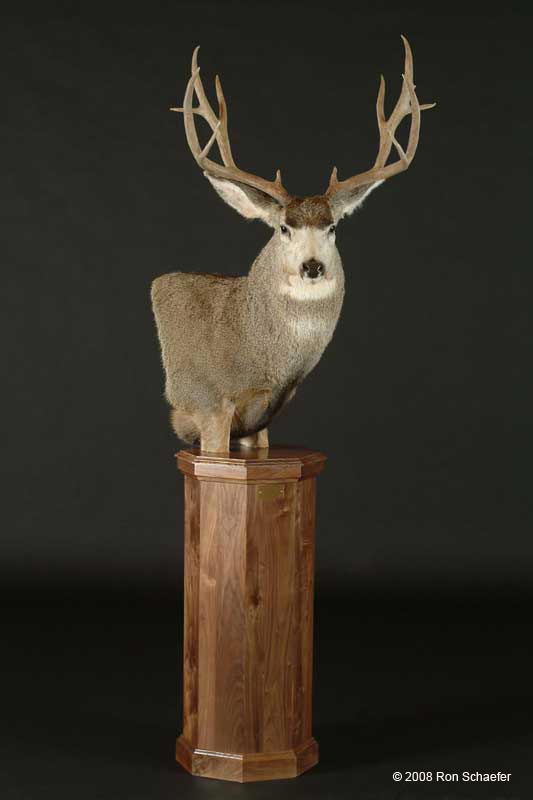 Big Game Taxidermy Half Size Amp Pedestal Mounts Gallery